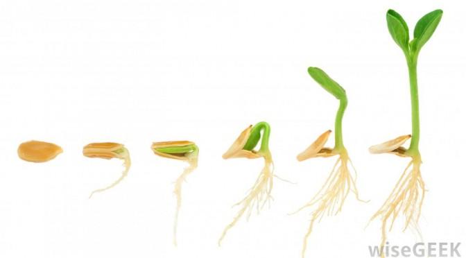 Like A Seed!